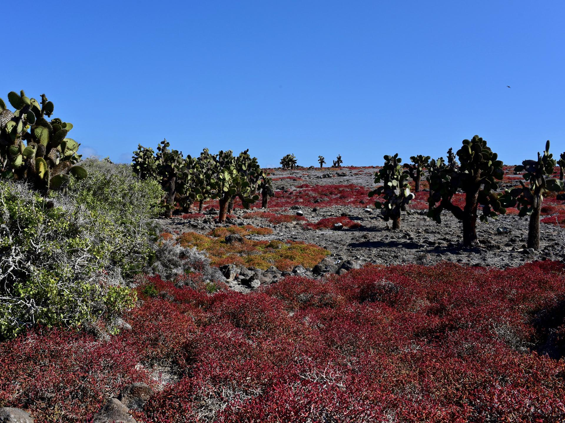 Galapagos Insel Plaza Sur