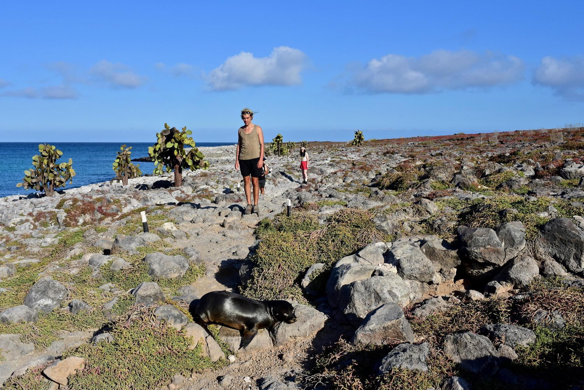 Seelöwen auf South Plaza Galapagos Inseln