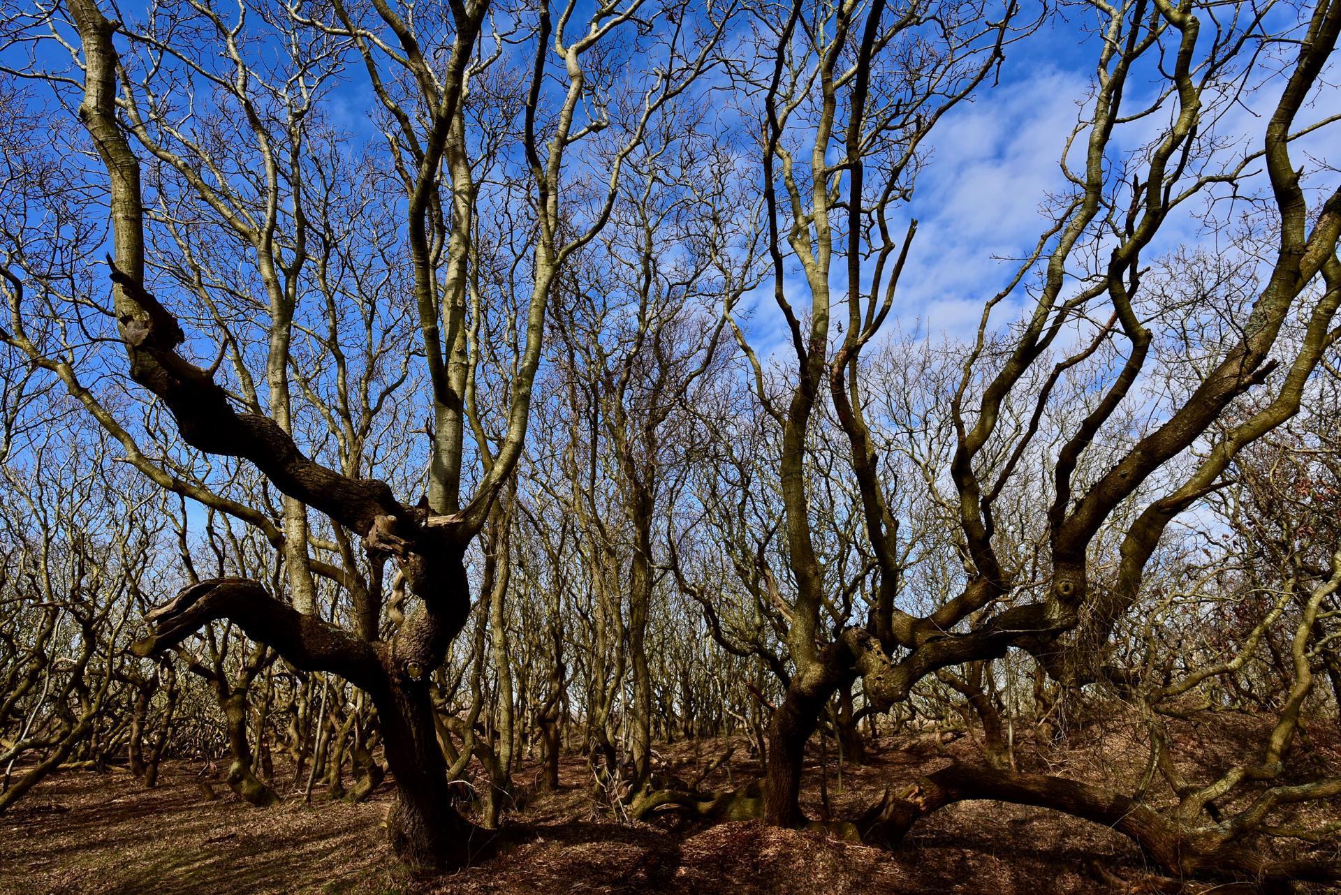Baum im de Manteling