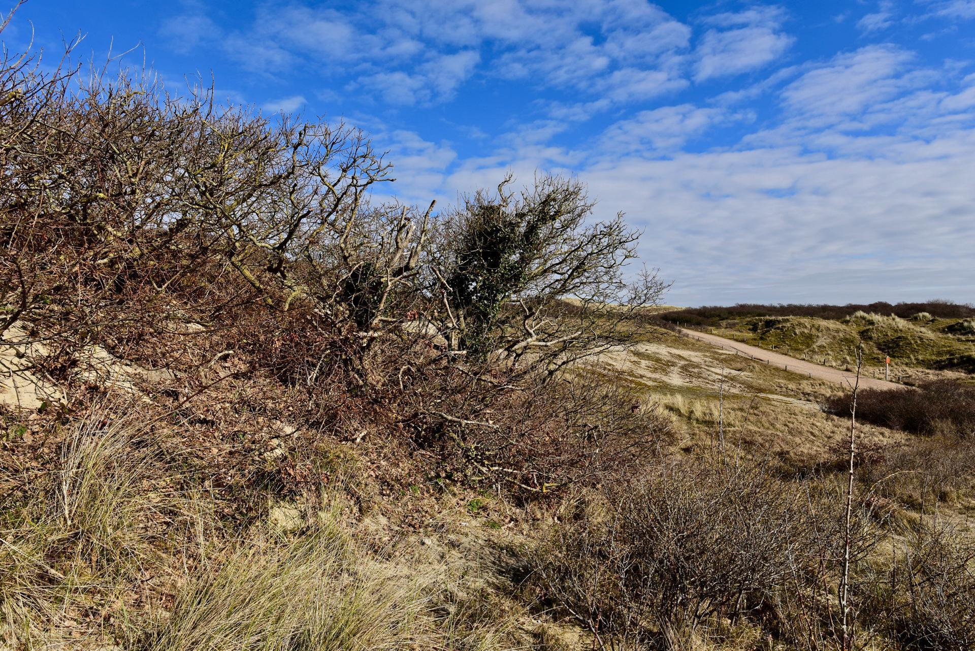 Dünenlandschaft De Manteling Zeeland