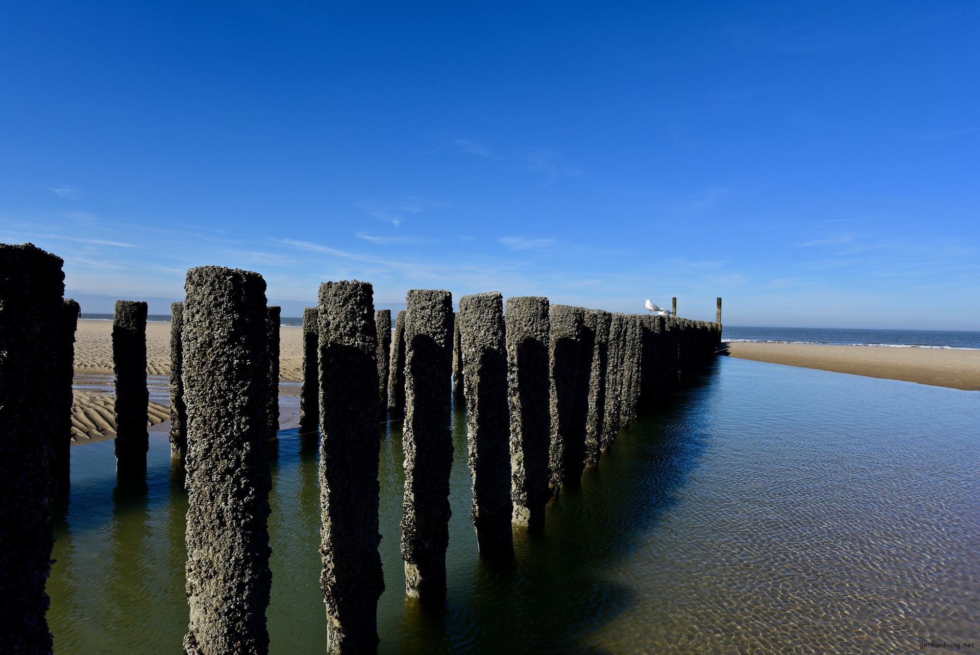 Wellenbrecher Holzpfähle Zeeland